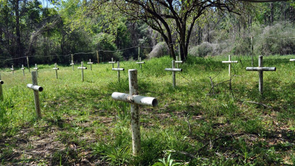 Feltételezett sírhelyek az egykori Dozier School of Boys kertjében